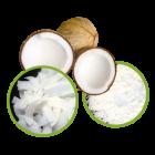 Buy Fresh Coconuts