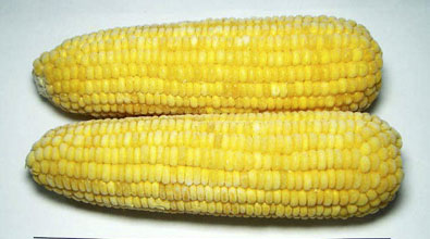 Buy Super Sweet Corn