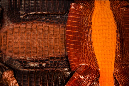 Buy Caiman leather