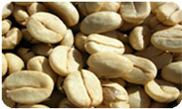 Buy Green Offee Bean
