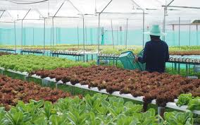 Buy Hydroponics Greenhouse Equipment system