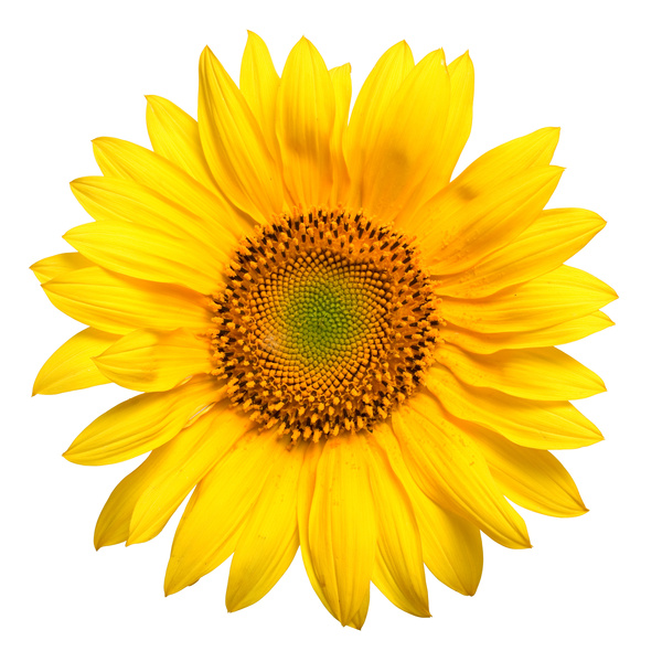 Buy Hair vitamins, herbs, and sunflowers
