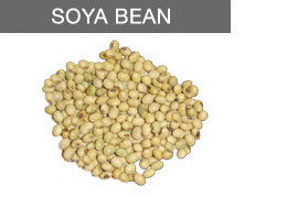 Buy Soy Beans