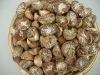Buy Dried Betel nuts