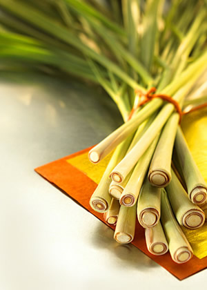 Buy Fresh Lemon grass