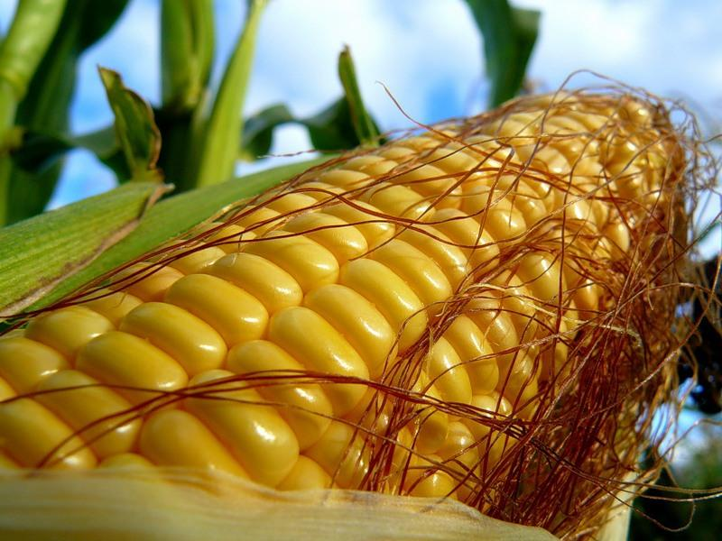 Buy Fresh Baby corn