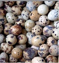 Buy Fresh quail eggs