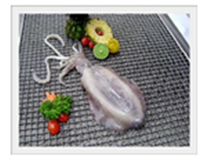 Buy Soft Cuttlefish (Sepistenthis lessoniana)