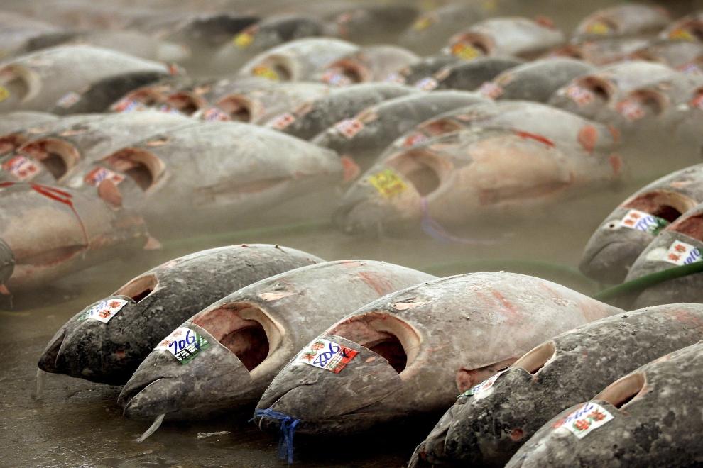 Buy Yellowfin Tuna Loins