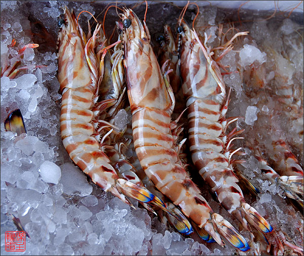 Buy Frozen Vannamei Shrimp