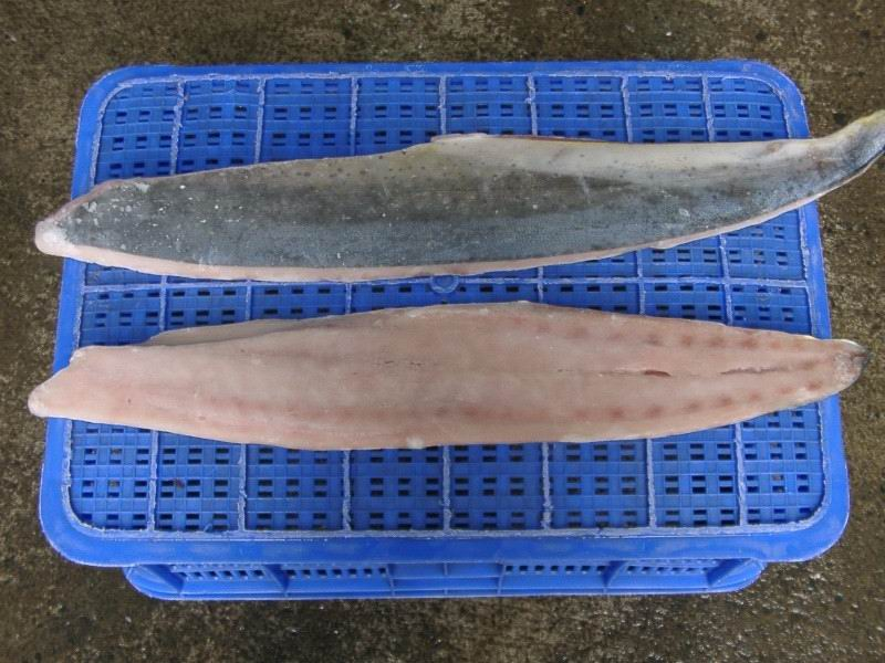 Buy Frozen Mahi Mahi Fillet