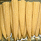Buy Sweet corn kernel