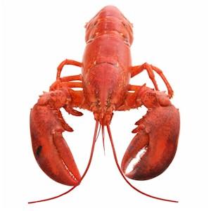 Buy Lobster