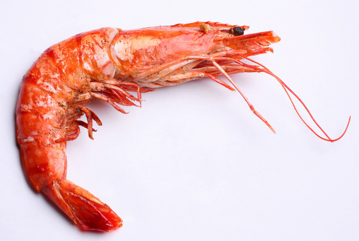 Buy Shrimp