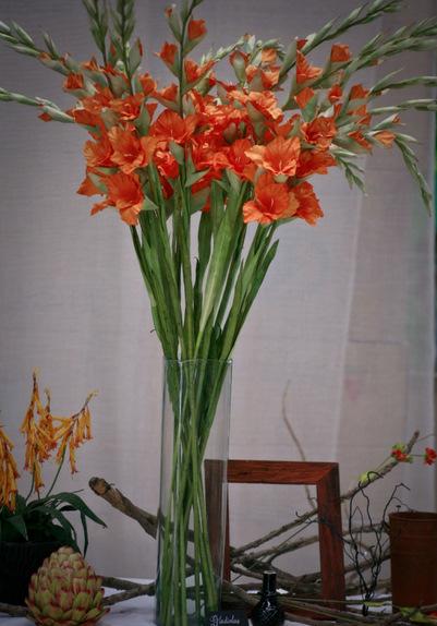 Buy Gladiolus