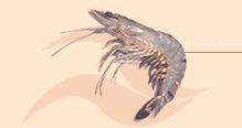 Buy Black Tiger Shrimp