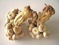 Buy Thai Garlic Head