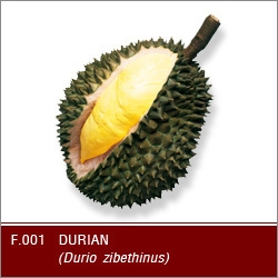 Buy Fresh Durian