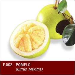 Buy Fresh pomelo
