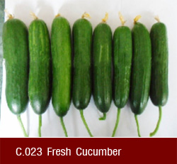 Buy Fresh Cucumber