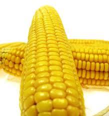Buy Sweet Corn