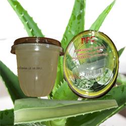 Buy Aloe Vera