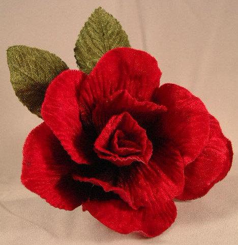Buy Actual_Red Rose