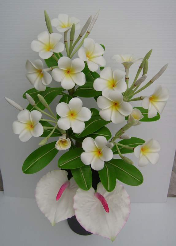 Buy Plumeria Actual size