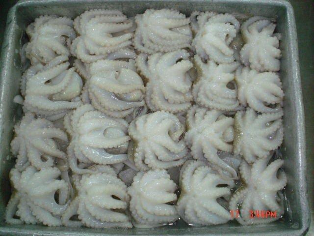 Buy Frozen Baby Octopus