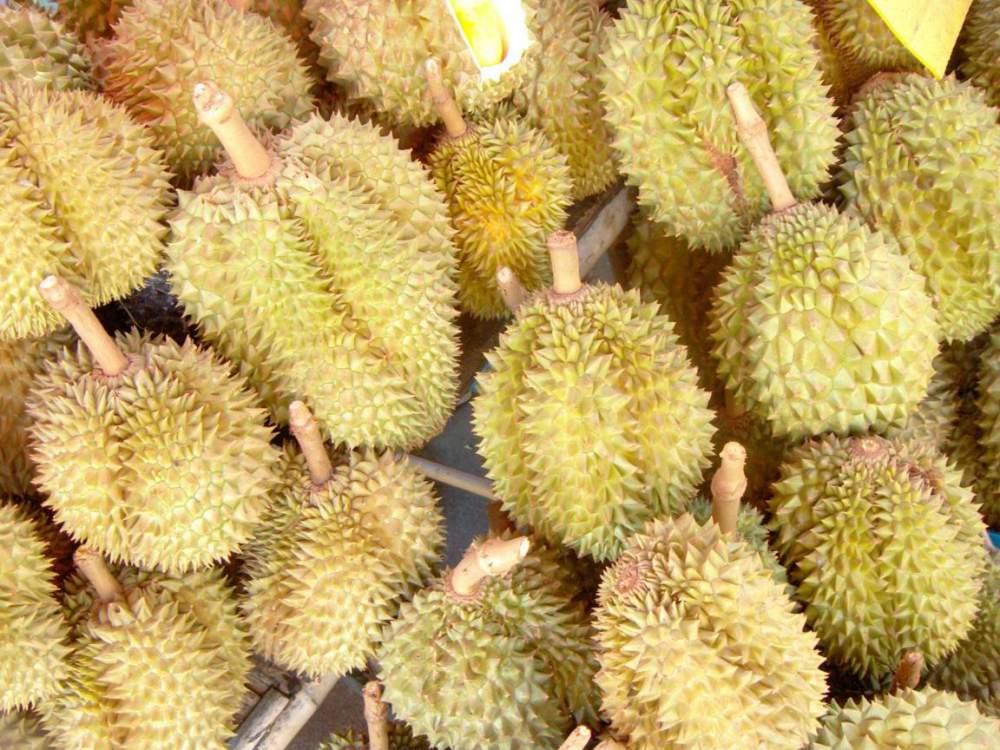 Buy Frozen Durian