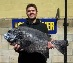 Buy Frozen Fish Spotted Knifejaw