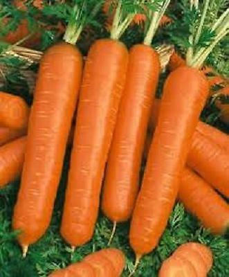 Морковь рейтинг сортов