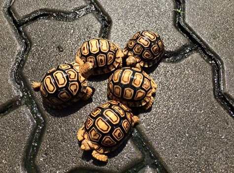Buy Tortoise Of All Varieties