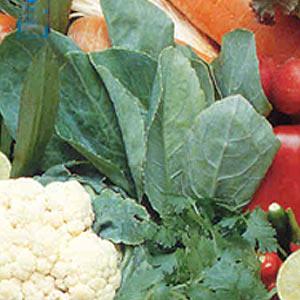 Buy Hong Kong Kale