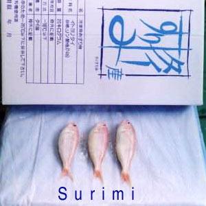 Buy Surimi