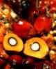 Buy Crude Glycerine From Biodiesel