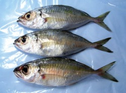 Buy Fish Frozen Whole-round Meaji