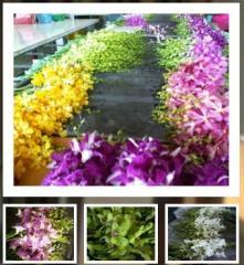 Orchid Den