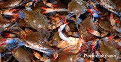 Crab meat