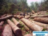Rough Sawn Timber Direct From Mill