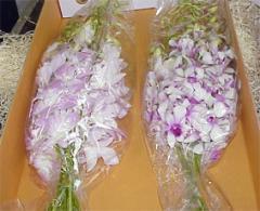 Срезанные орхидеи