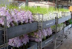 Орхидеи и другие комнатные растения в горшках