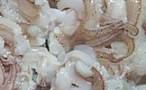 Squid Tentacle Block