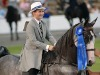 Made to Measure Horse Riding Suits