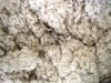 Cotton Waste for Mushroom Cultivation