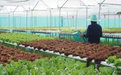 Hydroponics Greenhouse Equipment system