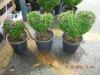 Flower pots Terracotta