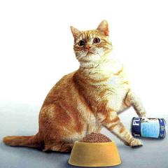 Petfood (Tuna Cat Food)