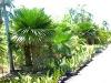 Natural Plants