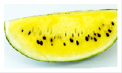 Yellow flesh Water Melon